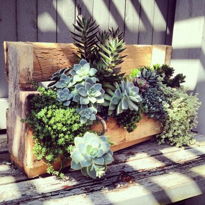Succulents outdoors
