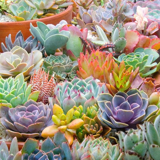 Colourful healthy succulents