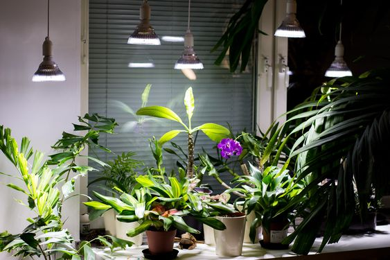 LED Indoor Growlights