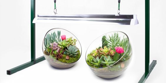 Succulent Growlights