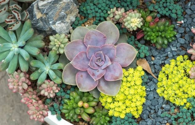 Planting succulents outside