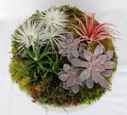 Succulent and Air Plants Arrangments
