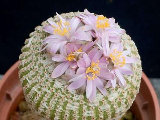 Yavia Flowers