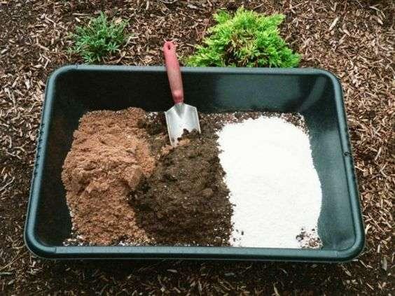 succulent soil
