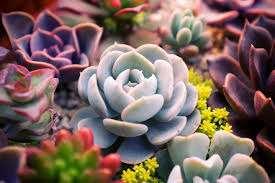 Succulent Arrangement Pruning