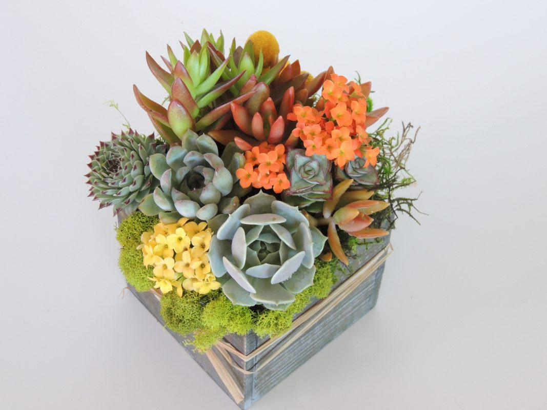 Pruning Succulents Tips For Maintaining Your Succulent