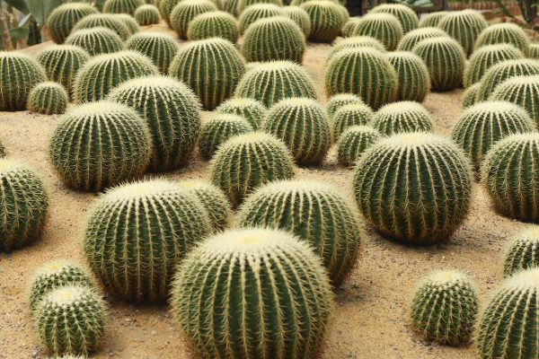 Cacti Outdoors