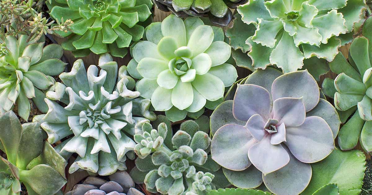 Grow Succulent Arrangement