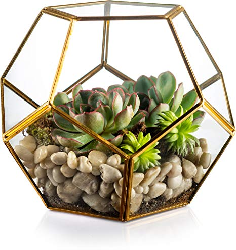 Succulent In a Glass Terrarium