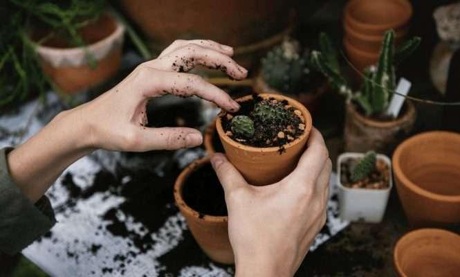Homemade Succulent Soil Mix