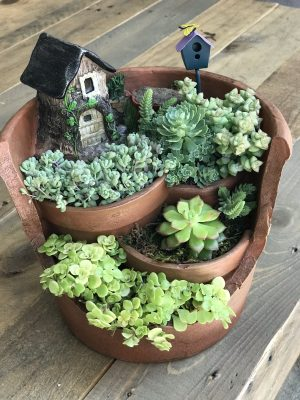 Different Succulents In Fairy Garden