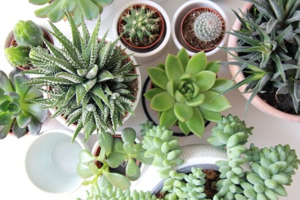 What Fertilizer To Choose For Succulents?