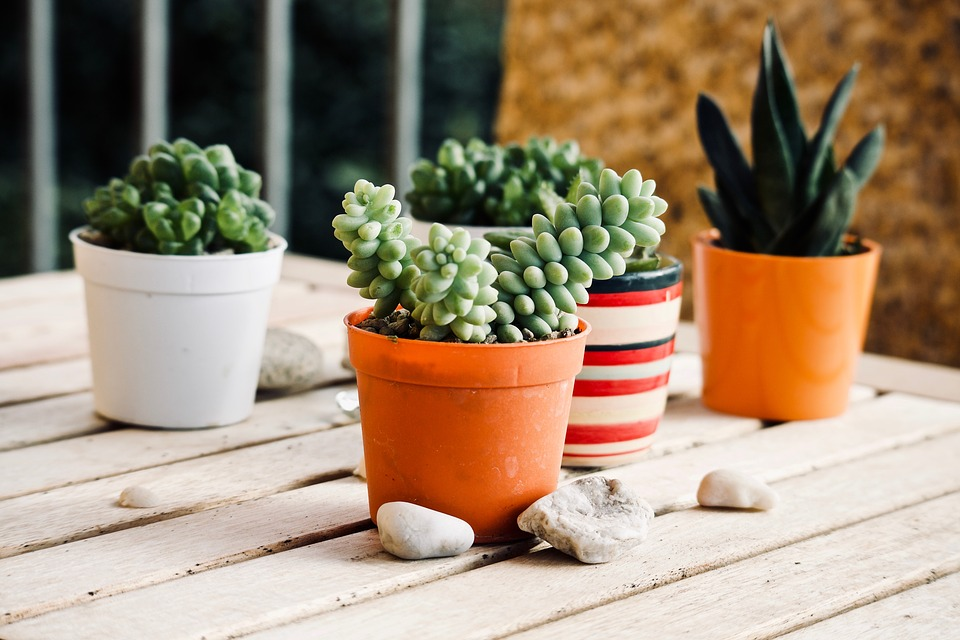 Planting a Succulent in a Container